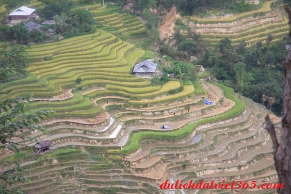 Hình đẹp ruộng Bậc Thang Hoàng Su Phì