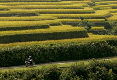 mùa vàng trên ruộng bậc thang Hoàng Su Phì