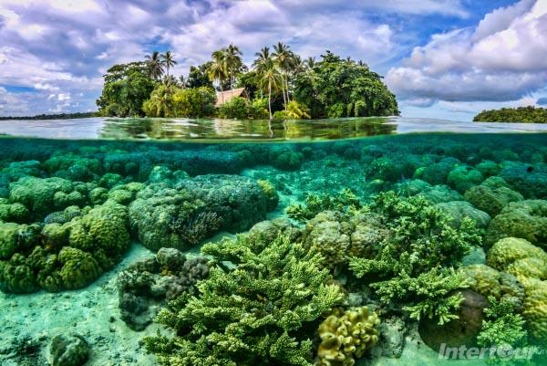 san ho trên đảo Coral