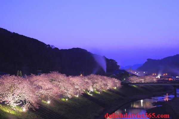 Hoa Anh Đào Nhật Bản tuyệt đẹp bên bờ sông