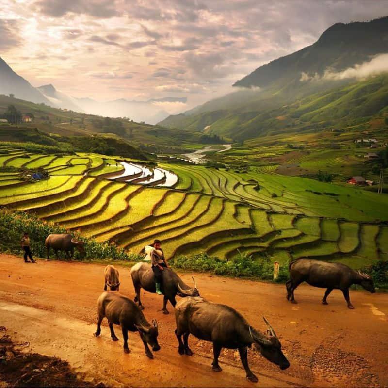 Du Lịch Miền Bắc 2 ngày 1 đêm - Hà Giang