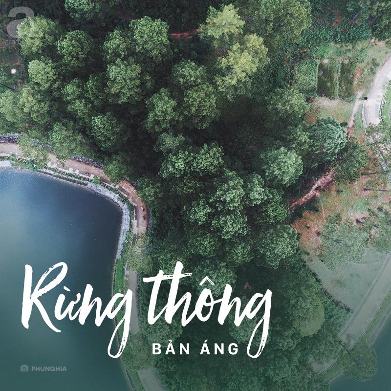Du Lịch Mộc Châu Từ Tphcm- Rừng Thông Bản Ang