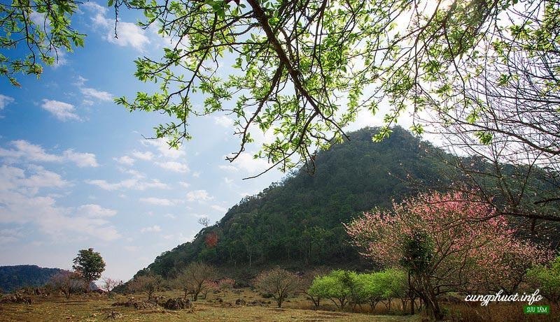 Vườn Hoa Mộc Châu - ảnh Cùng Phượt